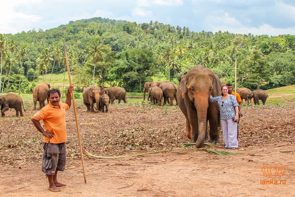 Слоновий питомник Пиннавела (Pinnawala Elephant Orphanage)
