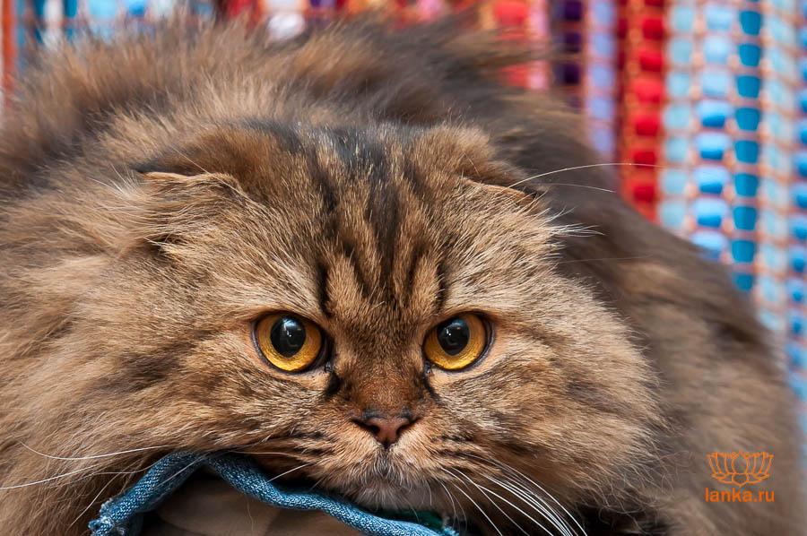 Перевозка домашних животных. Кошка Шушик