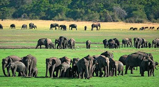 Встреча слонов
