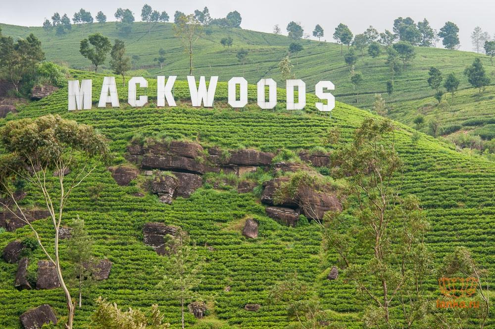 Чайная плантация Маквудс