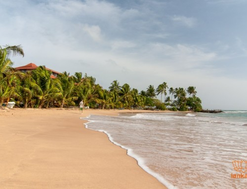 Шри-Ланка за семь дней