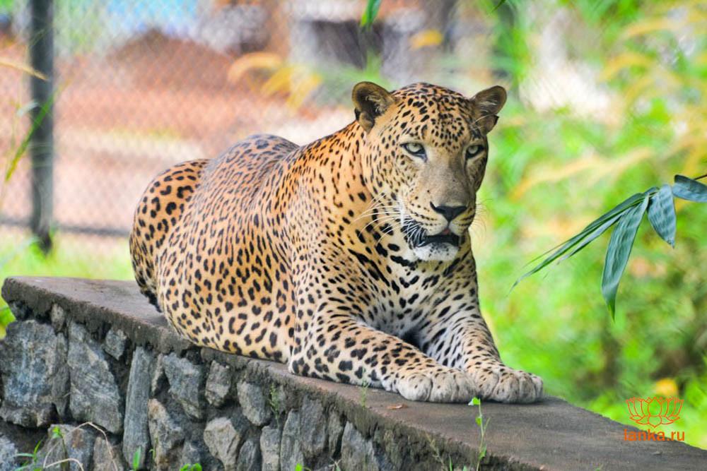 Pinnawala-Zoo.jpg
