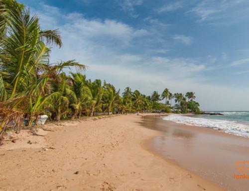 Семейное путешествие на чудо-остров Цейлон