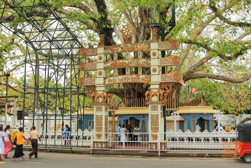Дерево Маха Бодхи