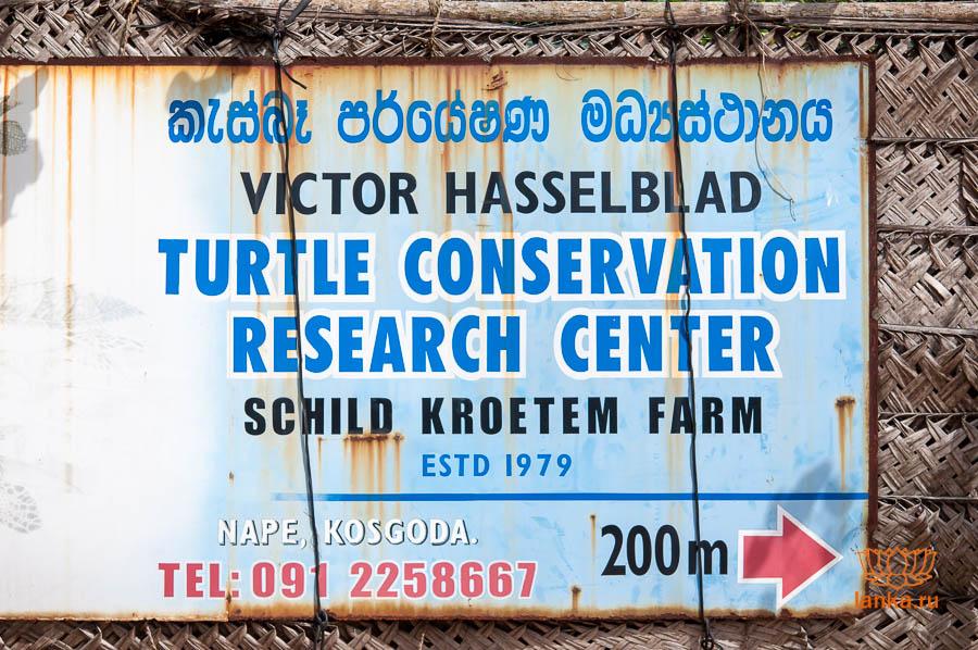Kosgoda Turtle