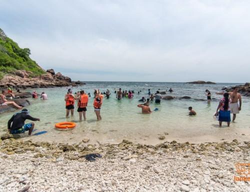 Новое видеo: остров Пиджеон и снорклинг