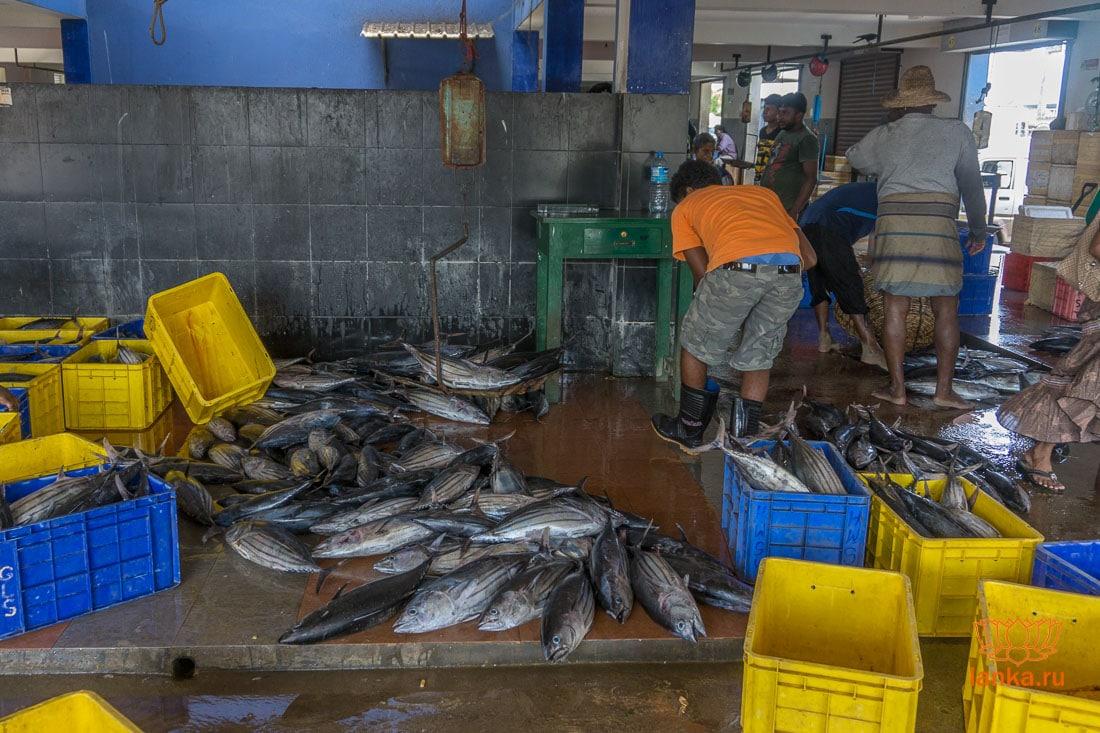 Рыбный рынок в Тринкомали