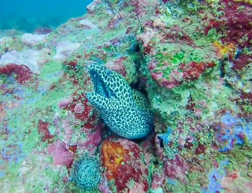 Бар риф Калпития (Kalpitiya Bar Reef)
