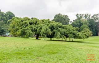 Сад Перадения