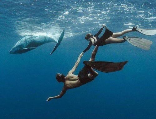 Снорклинг с китами