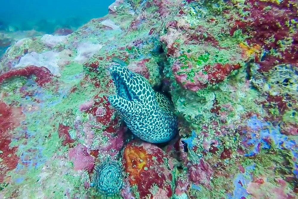 Бар риф (Bar Reef)