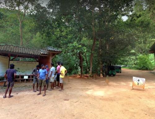 Вход в лес Синхараджа – Kudawa