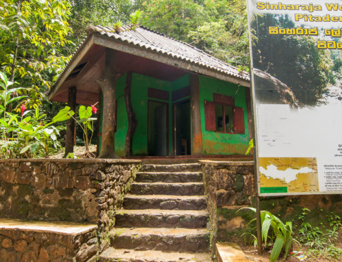 Вход в лес Синхараджа – Pitadeniya